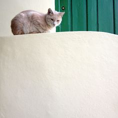 "12"" x 12"" Photography Print by Stephanie Sadler  - Athens Alley Cat - Stray - Greece - Travel"