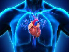Κόλπα για να αυξήσετε την τεστοστερόνη σας φυσικά Aortic Valve Replacement, Sleep Apnea Devices, Central Sleep Apnea, Nasal Septum, Types Of Surgery, Heart Anatomy, Wellness Activities, Pulmonary Hypertension, Normal Blood