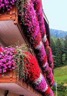 Flower Balconies ..South Tyrol Italy