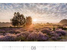 Vineyard, Country Roads, Outdoor, Moon Calendar, Morning Light, Colors, Pictures, Outdoors, Vineyard Vines