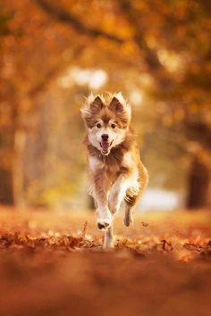 6 Tips for Photographing Dogs in Action – Fotografie tuts – - Dog Photography Pet Photography Tips, Animal Photography, Photography School, Digital Photography, Action Photography, Forensic Photography, Festival Photography, Photography Competitions, Photography Classes