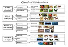Classificació dels animals Blog Primer A Sa Marina
