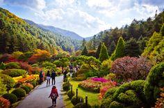 Garden of Morning Calm, South Korea   ... along the garden walkway. • Photo Credit: The Garden of Morning Calm