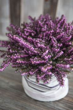 Sd, Planting Flowers, Urban, Interior, Garden, Plants, Inspiration, Image, Decor