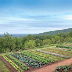 How to Make Cheap Garden Beds Organic Gardening, Gardening Tips, Mother Earth News, Starting A Garden, Square Foot Gardening, Edible Garden, How To Level Ground, Garden Planning, Permaculture