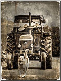 John Deere & German Shepherd