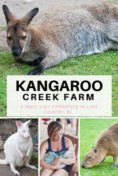 If you're visiting the Okanagan you have to check out the Kangaroo Creek Farm in Lake Country, BC (just outside Kelowna, British Columbia). Kids of all ages will love this educational farm, it's perfect for family travel. Family Vacation Packages, Cheap Family Vacations, Summer Travel, Travel With Kids, Family Travel, Things To Do In Kelowna, British Columbia, Columbia Kids, Columbia Road