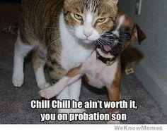 That ain't no soft kitty.