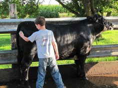 Iowa CommonGround volunteer, Jill Vander Veen's son washes his calf, a 4-H project in preparation for the upcoming county fair. Washing cattle is a common practice among livestock showmen. Learn more about Jill and other volunteers at: FindOurCommonGround.com.
