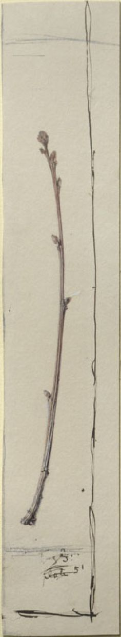 Ruskin, John - Study of an Oak Twig Drawing School, John Ruskin, Toned Paper, Writing Styles, Graphite, British, Study, Paintings, Gallery