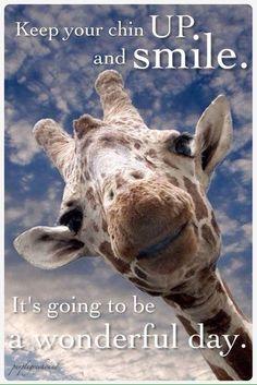 Inspirational giraffe just wants you to be happy. Thanks anonymous giraffe! Animals And Pets, Baby Animals, Funny Animals, Cute Animals, Smiling Animals, Jungle Animals, Wild Animals, Beautiful Creatures, Animals Beautiful
