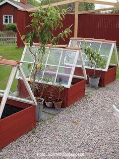 MIniväxthus med hjälp av gamla fönster och tegelpannor