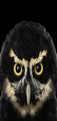 Wise Owl, Studio Portraits, The Guardian, Animals Beautiful, Photo Art, Fairy Tales, Personality, Wildlife, Creatures