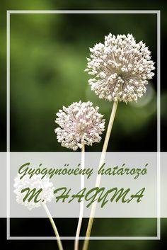 Allium, Herbal Medicine, Superfoods, Herbalism, Dandelion, Remedies, Herbs, Health, Flowers