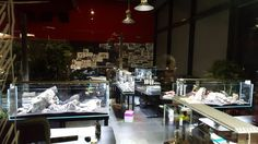 Akwaria w firmie Carlex – Aquaman Nature Studio