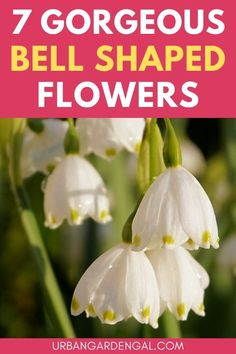 Bell-shaped flowers are gorgeous additions to flower gardens, containers and hanging baskets. If you're looking for flowers shaped like bells you're sure to find some beautiful options on this list. #flowers #flowergarden