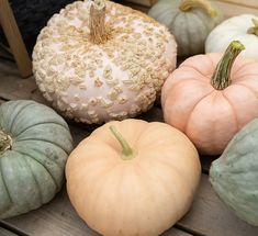 Avert, Manage, And Eliminate Black Mildew Pumpkin Patches Have Always Gone Hand-In-Hand With The Autumn Season. In The Last Few Years We've Seen A Huge Jump In The Variety And Hues Of Squash And Pumpkins Headlining Patios And Front Doors. I've Scoured The