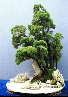 "In bonsai growing, the slanting style is one of several styles that are used to shape and ""train"" the bonsai tree. Plantas Bonsai, Bonsai Forest, Bonsai Garden, Succulents Garden, Ikebana, Bonsai Plante, Indoor Bonsai Tree, Bonsai Styles, Miniature Plants"