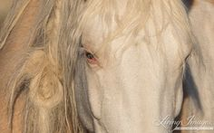 Cheyenne's Eye  Fine Art Wild Horse Photograph by Carol Walker www.LivingImagesCJW.com