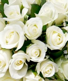 Pure white for your pure love.