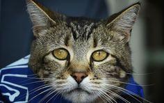 Отважная кошка-спасатель получила самую высокую награду!