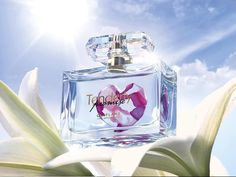 Šifra : 31875-Tenderly Promise toaletna voda kraljevskog ljiljana dominiraju srcem ovog elegantnog cvetnog mirisa,i ostavljaju utisak topline i nežnosti.50ml.