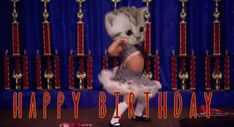 Cat Wow GIF - Cat Wow Kittyman - Discover & Share GIFs