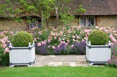 Rose 'Bonica' and Lavender Hidcote