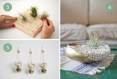 Three creative ways to display air plants.