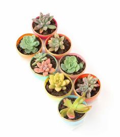 Mini Spring Succulent Planters | Awesome DIY Craft To Make Money This Spring | DIY Projects