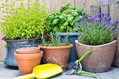 Comment cultiver les fines herbes au balcon - Châtelaine
