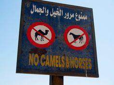 The Signs tell a tale of #Dahab, #Sinai, #Egypt