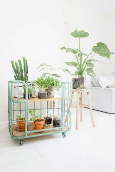 woning inrichten met planten