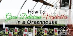 Learn how to grow vegetables in a greenhouse, and you will be able to enjoy fresh produce year-round -- even in the harsh, bitter cold of the winter months.