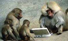 micos digitals
