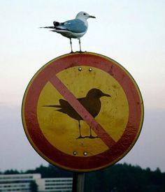 Hey, bird! Are you challenging the authority?