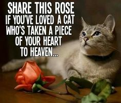 Share this rose if you've loved a cat who's taken a piece of your heart to heaven.