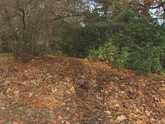 Don't rake your leaves, scientists say - http://www.usatoday.com/story/news/nation-now/2014/11/19/do-not-rake-your-leaves/19266079/