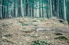hilly forest - Google Search
