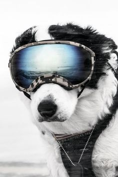K-9 Piper Is The Coolest Airport Guard Dog We've Ever Seen