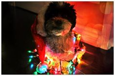 @Hillcrest Mall This is my cute #Naughty dog, Mr. Bear