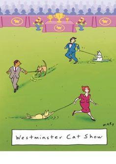 Cat show!