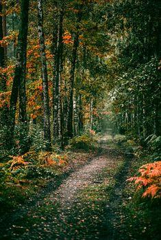 Autumn forest walk (Berlin, Germany) by Denny Bitte #LandscapeForest