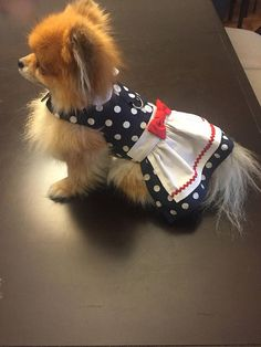 Lucy inspired navy white polka dot dress with white collar and apron trimmed in red Rick rack and applique heart. D ring for leash attachment. Cute and practical. Message me if interested in a bit bigger dog dress. Xxs fits 1 1/2 to 2 1/2 lbs., chest 8 to 10 (teacup, tiny puppy) XS White Polka Dot Dress, Polka Dots, Tiny Puppies, Rick Rack, I Love Lucy, Dog Dresses, White Collar, Dog Leash, Big Dogs