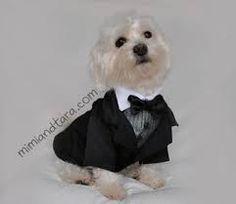 Afbeeldingsresultaat voor free pattern dog wedding clothes