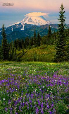 Mount Rainier Wildflowers by kevin mcneal, via Flickr