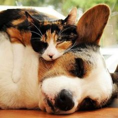 Dogs are man's best friend. And cat's purrfect pillow.