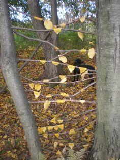 Anthony Holdsworth inspired art. Sticks wedged between tree trunks