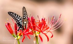 Flowers and butterflies by seok6419. @go4fotos