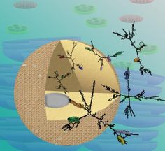 Penn scientists identify patterns of RNA regulation in the nuclei of plants